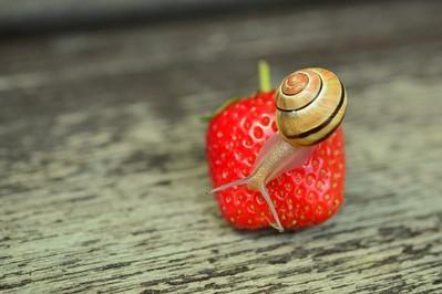 Nie musisz tego jeść… - felieton Doroty Lipińskiej
