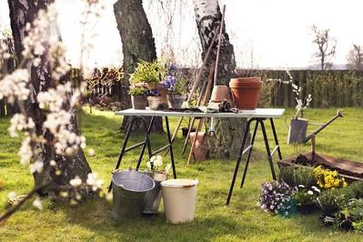 Jak przygotować ogród na zimę? Eksperci z Euroflorist podpowiadają!