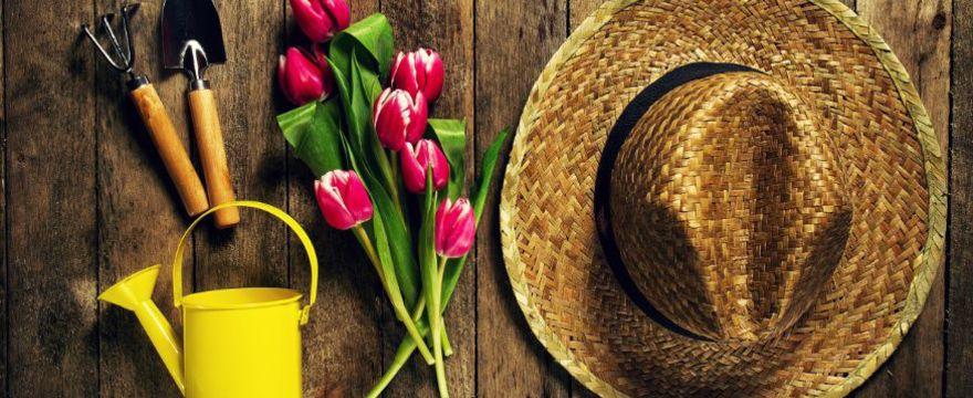 Pomysł na ogród – najnowsze trendy i pomysły