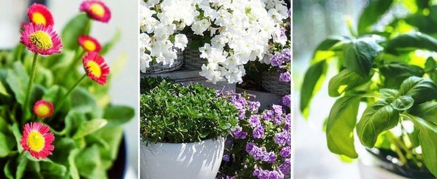 Przydomowy ogródek czyli rośliny na balkon i taras